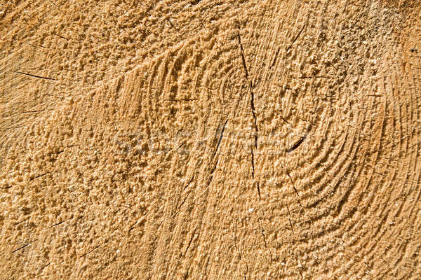 Wood texture of cut tree trunk, close-up Stock photo © artush