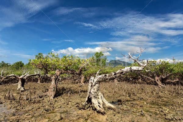 mangrove tree North Sulawesi, Indonesia Stock photo © artush