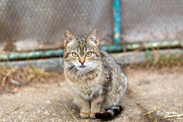 猫 肖像 いい クローズアップ 小 ストックフォト © artush