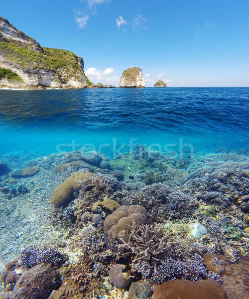 Underwater and surface split view in the tropics Stock photo © artush