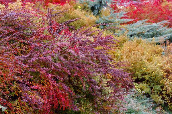 autumn colors composition in garden Stock photo © artush