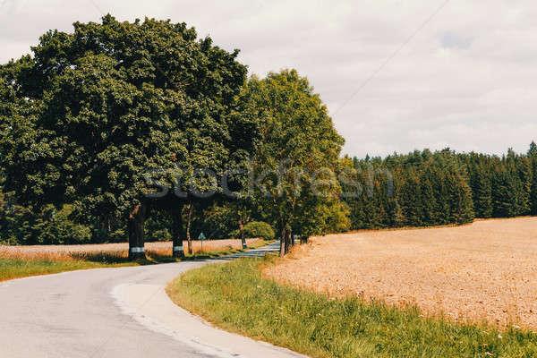 Weg mooie voorjaar landelijk veld Stockfoto © artush