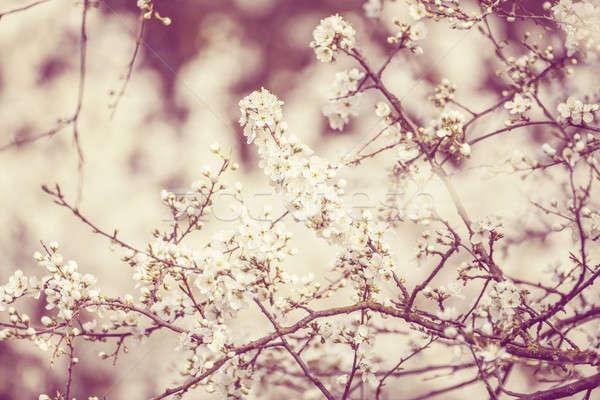árbol primavera superficial enfoque fondo Foto stock © artush