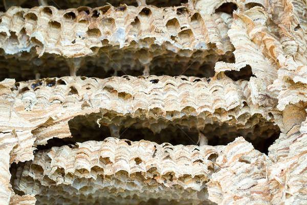 Wasp nest background Stock photo © artush