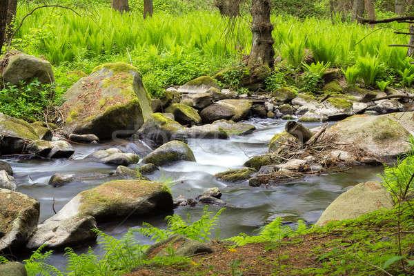 Klein wild rivier boheems bos water Stockfoto © artush