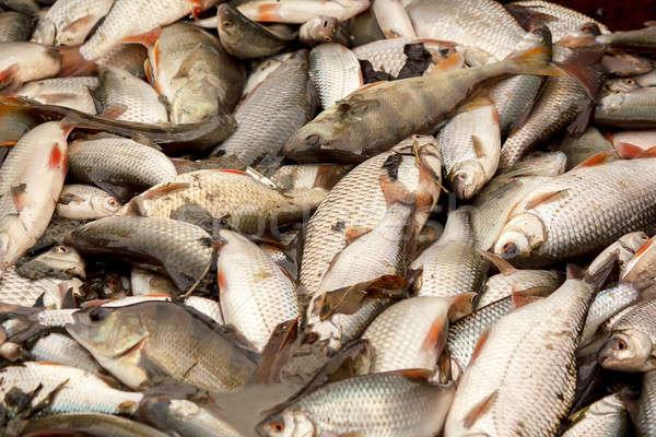 freshwater fish caught in fishing pond Stock photo © artush