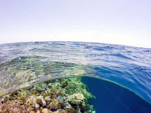 Underwater and surface split view in the tropics sea Stock photo © artush