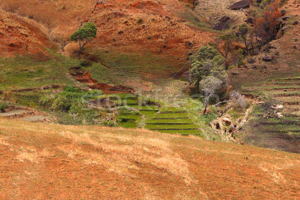 Road through Madagascar highland countryside landscape. Stock photo © artush