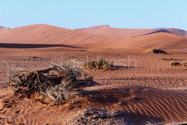 Gyönyörű tájkép rejtett sivatag napfelkelte halott Stock fotó © artush