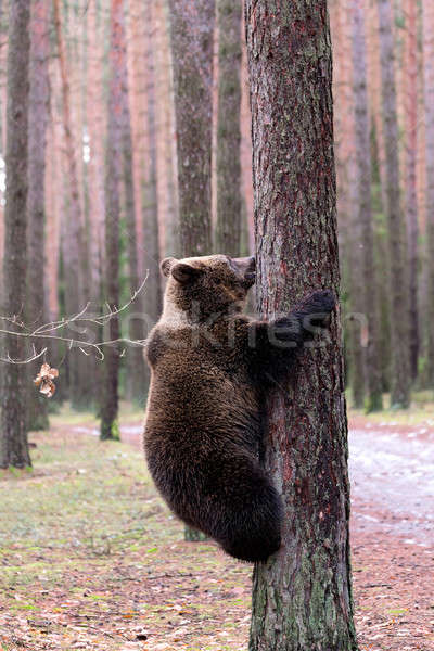 Invierno forestales grande femenino inicio Foto stock © artush