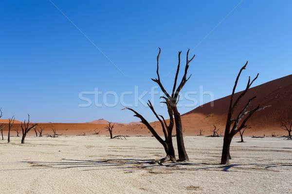 隠された 砂漠 美しい 日の出 風景 死んだ ストックフォト © artush