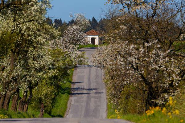 Yol geçit elma ağaçlar çiçeklenme bahar Stok fotoğraf © artush