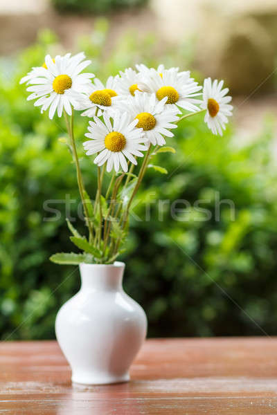 daisy flower in the vase with shallow focus Stock photo © artush