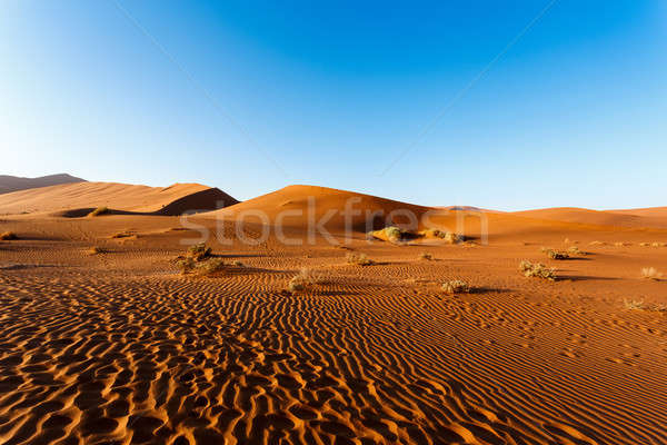 sand dunes at Sossusvlei, Namibia Stock photo © artush