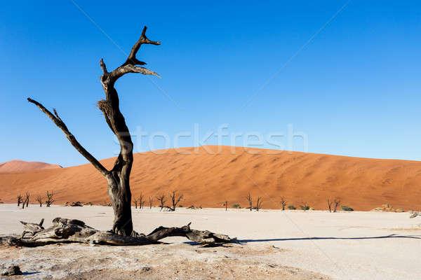 Piękna krajobraz śmierci dolinie Namibia Świt Zdjęcia stock © artush