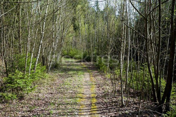 весны выстрел путь небольшой молодые Форрест Сток-фото © artush