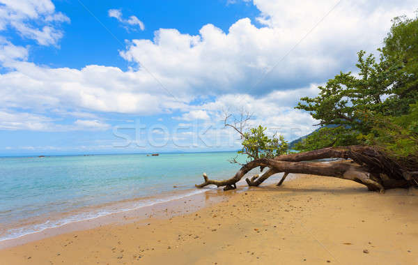 Beautiful dream paradise beach, Madagascar Stock photo © artush