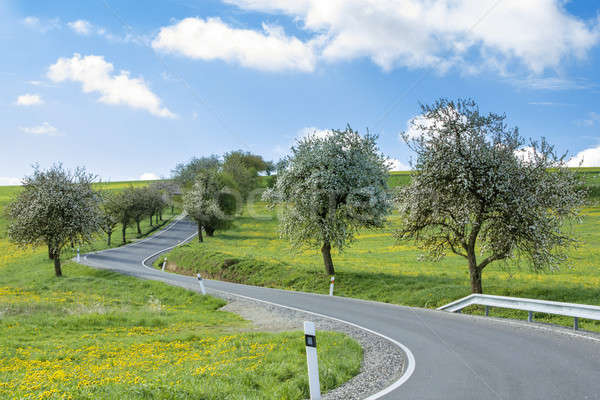road with alley of cherry trees in bloom Stock photo © artush