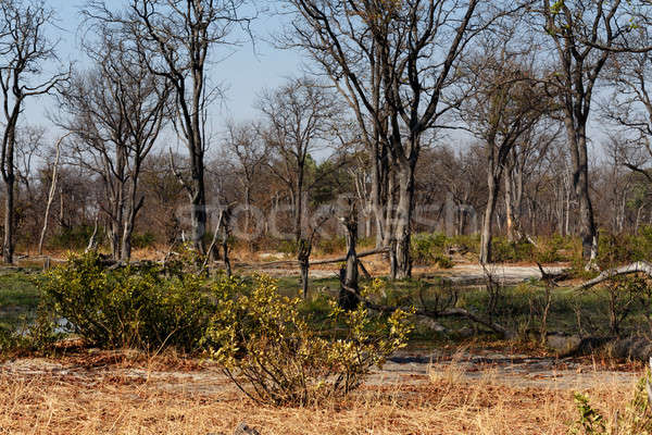Сток-фото: игры · резерв · пейзаж · красивой · дельта · Ботсвана