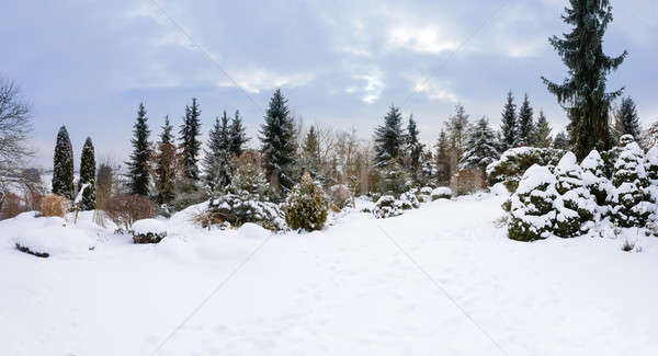 beautiful winter garden covered by snow Stock photo © artush