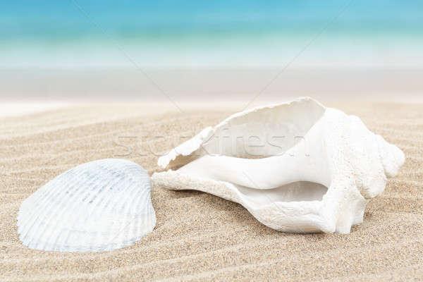 Concha arena azul dos blanco Foto stock © artush