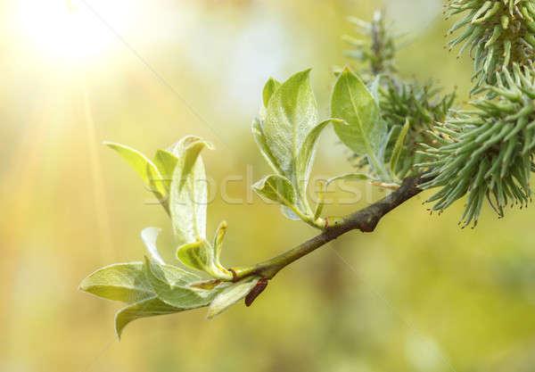 зеленый весны мелкий Focus bokeh солнечный свет Сток-фото © artush