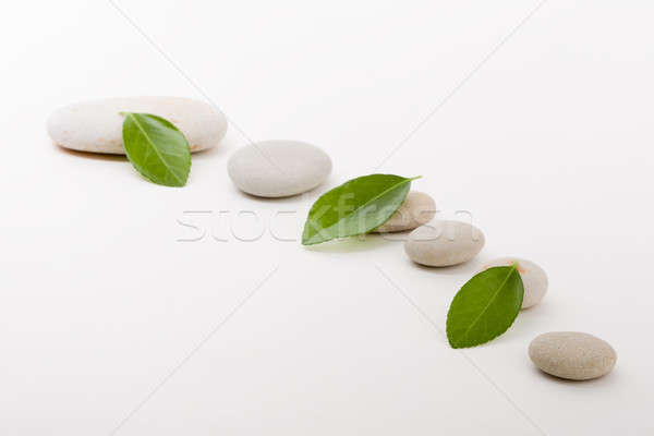 Zen pierres feuille verte caillou comme pierre Photo stock © artush