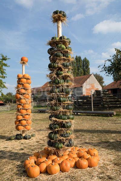 Ripe autumn pumpkins arranged on totem Stock photo © artush