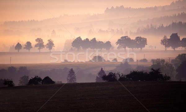 Najaar mistig mistig zonsopgang landschap boom Stockfoto © artush