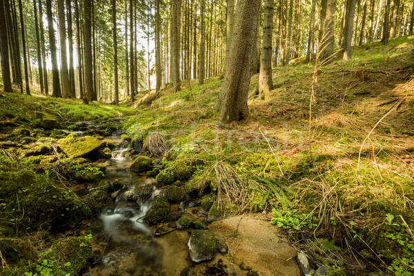 Falls on the small mountain river in a forest Stock photo © artush