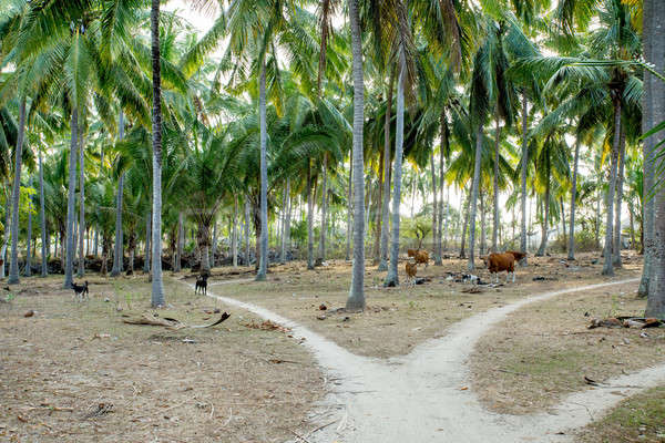 Indonesia campagna bovini rurale percorso Foto d'archivio © artush