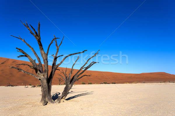 Escondido deserto belo nascer do sol paisagem morto Foto stock © artush