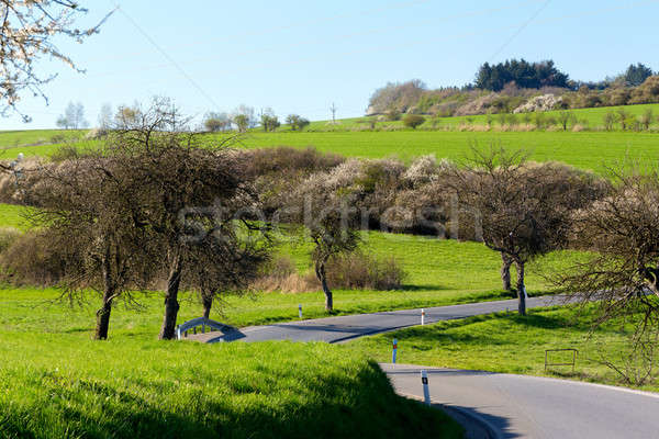 road with alley of trees Stock photo © artush