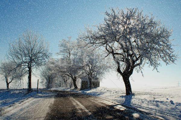 winter scene with snow, sun and blue sky Stock photo © artush