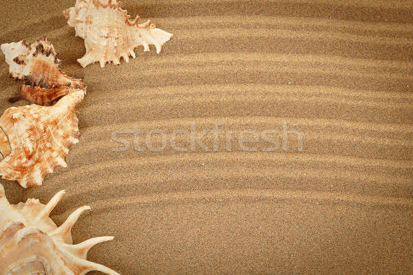 sea shells with sand as background  Stock photo © artush