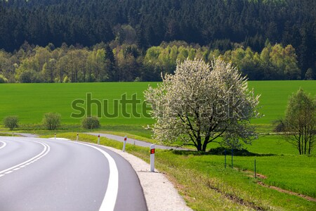 spring flowering tree in countryside Stock photo © artush