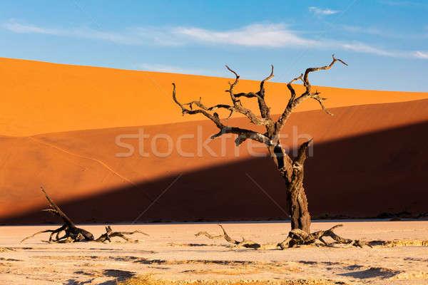 мертвых пейзаж Намибия красивой вечер цветами Сток-фото © artush