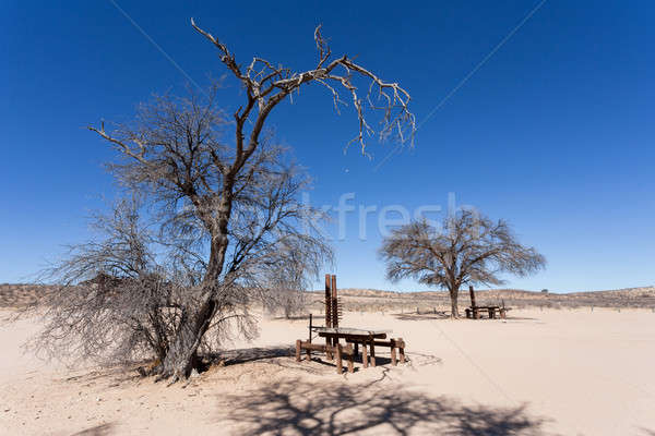 stopover rest place in Kgalagadi transfontier park Stock photo © artush