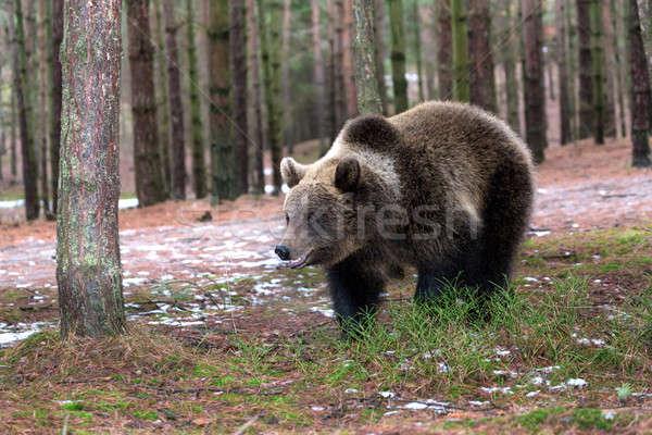 Inverno floresta europa República Checa olhos Foto stock © artush