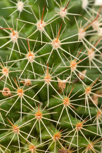 Quills and prickly cactus spines  Stock photo © artush
