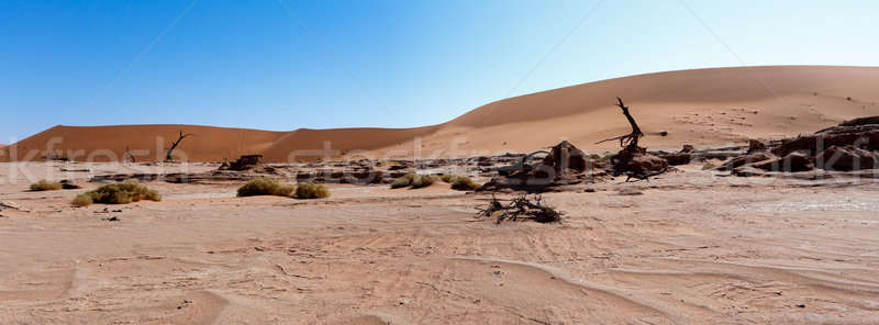 beautiful landscape of Hidden Vlei in Namib desert panorama Stock photo © artush