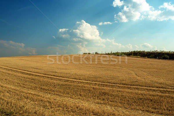 Beautiful landscape with harvested field Stock photo © artush