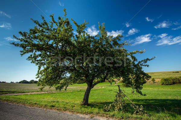 Vert pommier branche route scène rurale République tchèque Photo stock © artush