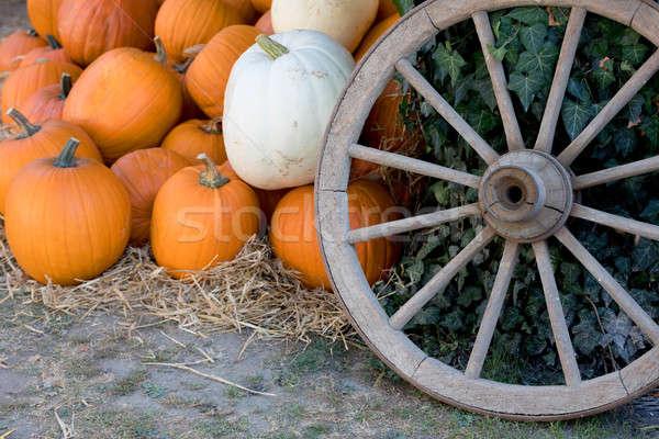 Automne ferme orange sol Photo stock © artush
