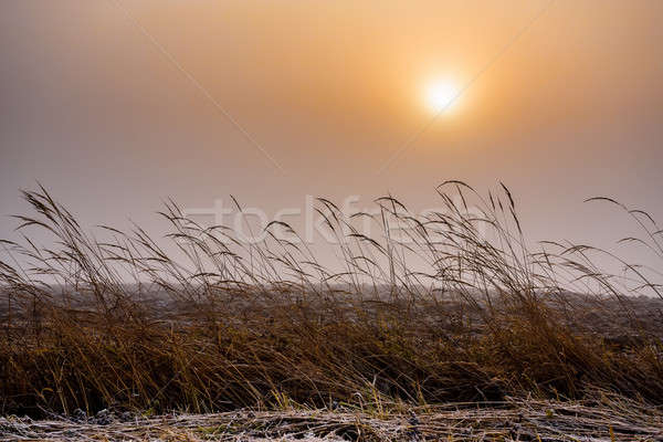 Misty morning sunrise over grass  Stock photo © artush