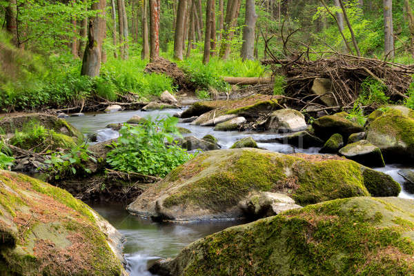 небольшой реке богемский лес чешский Сток-фото © artush