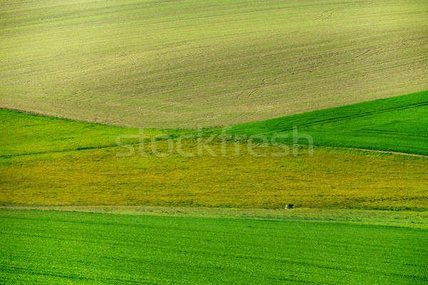 Beautiful green spring rural landscape Stock photo © artush