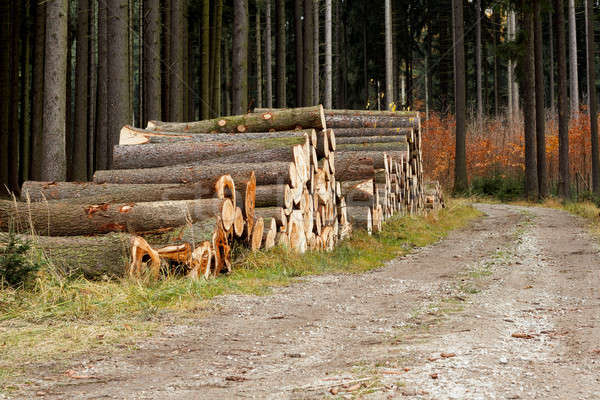 Pile of wood near forest road Stock photo © artush