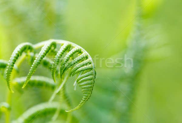 Varen blad ondiep focus jonge natuurlijke Stockfoto © artush