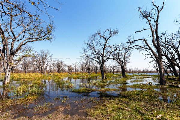 Gry rezerwa krajobraz piękna delta Botswana Zdjęcia stock © artush